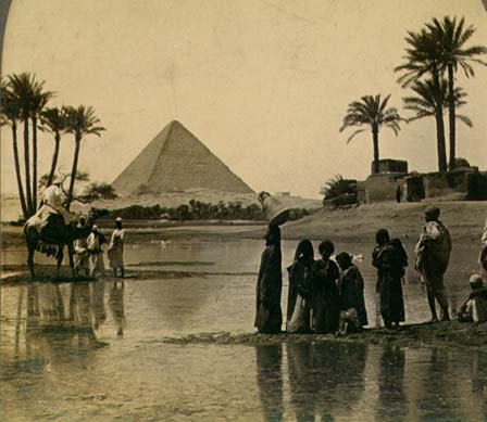 Pyramid-old-date-palms